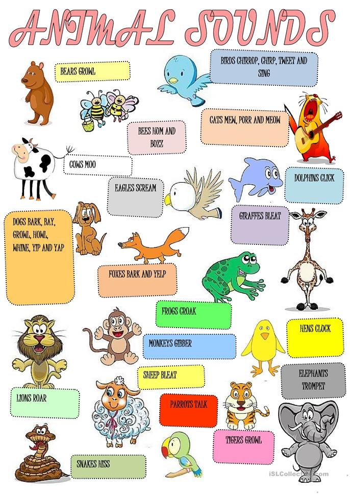 animals sounds and pictures pdf