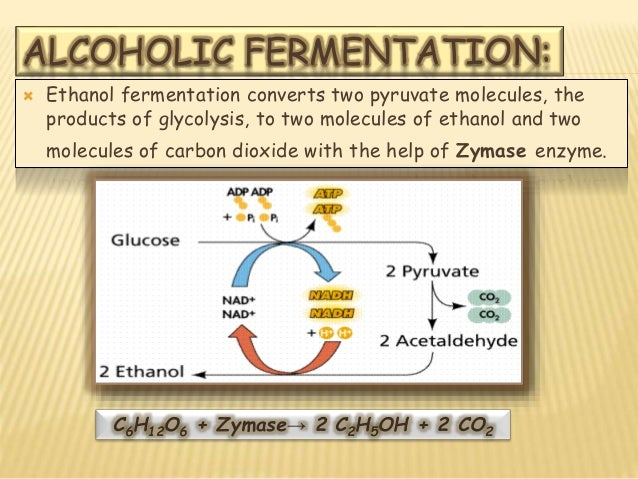 anaerobic respiration and fermentation pdf