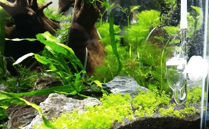 co2 aquarium guide